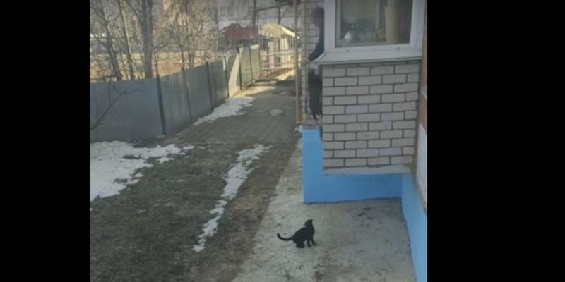 Un homme utilise un moyen original pour faire rentrer ses chats !