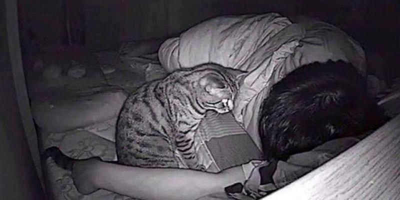 Il installe une caméra dans sa chambre et fait une étrange découverte sur son chat...