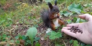 Un randonneur donne des noisettes à un écureuil et... il se fige pendant plusieurs minutes