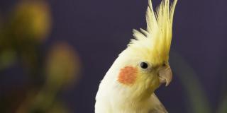 Dinosaures à plumes – Comportement aviaire
