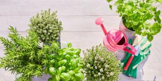 Les 7 erreurs les plus fréquentes à éviter avec les aromatiques