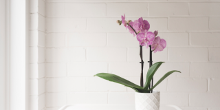 Orchidée : 15 erreurs à ne surtout pas commettre